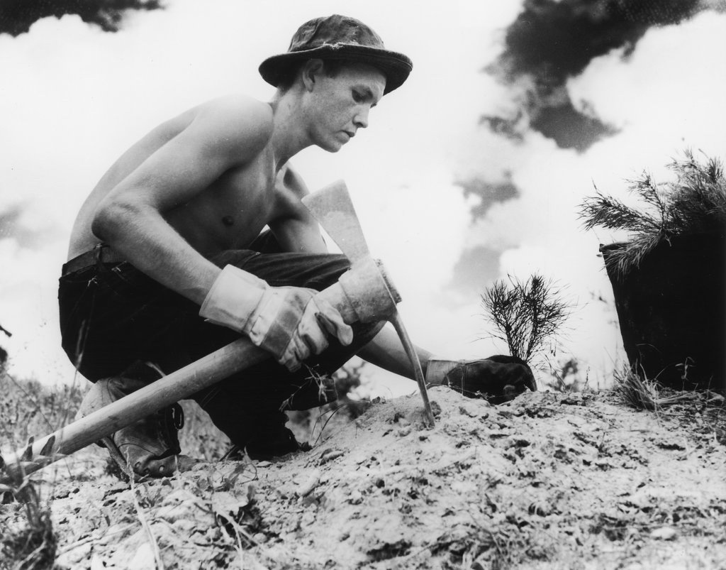 Un arruolato della Civilian Corsevation Corps mentre pianta un albero intorno al 1938.